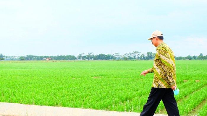 Luncurkan Beras Basmati Asli Indonesia, Kementan: Beras Kita Layak Ekspor 1