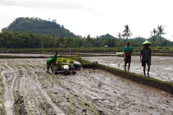 Produksi Pertanian Meningkat dengan Modernisasi 1