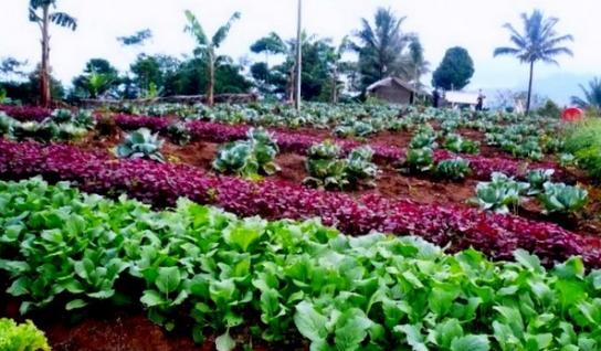 Prinsip Pertanian Organik untuk Kesehatan 6